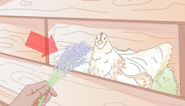100 نشانه های مرغ اماده تخم گذاری09131007689