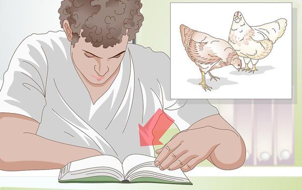 1212 نشانه های مرغ اماده تخم گذاری09131007689