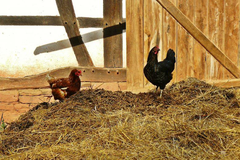 تغذیه مرغ بومی-تغذیه مرغ تخم گذار09121986651 بوقلمون بيوتي , بوقلمون_گوشتي , بوقلمون گوشتي , خريد بوقلمون BUT6 , بوقلمون بومي , بوقلمون بيوتي , بوقلمون صنعتي , بوقلمون ارگانيك , بوقلمون سفيد , بوقلمون بيوتي 6 , بوقلمون بيوتي فوق سنگين , بوقلمون محلي شمال , خريد بوقلمون گوشتي در ورامين , فروش بوقلمون فرانسوي , فروش جوجه بوقلمون يكماهه در ورامين , بوقلمون بي يو تي در اروميه , قيمت جوجه بوقلمون بي يو تي , قيمت جوجه بوقلمون پانزده روزه , قيمت جوجه بوقلمون 15 روزه , حمل بوقلمون بيوتي زنده در ورامين , بوقلمون گوشتي در ورامين , خريد و فروش بوقلمون در ورامين, فروش بوقلمون گوشتي در ورامين , بوقلمون بيوتي 6 , خريدار جوجه بوقلمون but , جوجه يكماهه بوقلمون در ورامين , پرورش بوقلمون, جوجه بوقلمون , بوقلمون بيوتي 6 فوق سنگين, بوقلمون بيوتي 6 , قيمت جوجه بوقلمون بي يو تي , پرورش بوقلمون , جوجه بوقلمون, بوقلمون برنز , بوقلمون برنز آمريكايي , بوقلمون برنز انگليسي , بوقلمون برنز انگليس , بوقلمون برنز آمريكا , بوقلمون برنز كانادا , بوقلمون برنز ماسوله , بوقلمون برنز انگليس يكماهه , بوقلمون برنز فرانسوي , بوقلمون برنزآمريكا , بوقلمون برنز انگليسي 35 روزه , بوقلمون برنزه , بوقلمون برنز , مرغ , مرغ بومي , مرغ بومي گلپايگاني , مرغ بومي تخمگذار , تخمگذار , مرغ تخمگذار , جوجه مرغ بومي , جوجه تخمگذار بومي , مرغ بومي 5 ماهه , مرغ 5 ماهه , مرغ 5 ماهه بومي گلپايگان , مرغ بومي گلپايگان اصل , مرغ لوهمن قهوه , مرغ لومهن , مرغ بومي بلك , مرغ بومي گوشتي , مرغ بومي گلپايگاني , مرغ ال اس اس, مرغ پولت , نيمچه مرغ بومي , مرغ بومي محلي , بلدرچين , بلك استار , پليموت راك , مرغ بومي بلك , مرغ بومي بلك استار , مرغ بلك استار , مرغ , مرغ بومي تخمگذار , مرغ بومي محلي , نيمچه مرغ , نيمچه , نيمچه دو ماهه بلك , مرغ لوهمن قهوه , مرغ لوهمن , مرغ لوهمن دم طلايي , شترمرغ , شترمرغ پرواري , شترمرغ هچري يكماهه دوماهه , شترمرغ مولد , شترمرغ پرواري , شترمرغ استراليايي , شترمرغ ايران , شترمرغ آفريقايي , شترمرغ تربت حيدريه , شترمرغ اصفهان , شترمرغ يكماهه , شترمرغ روغن , روغن شترمرغ , شترمرغ زرينشهر , شترمرغ هچري , شترمرغ گيلان , شترمرغ گردن آبي , شترمرغ گوشتي , شترمرغ نر , شترمرغ ماده , شترمرغي , شترمرغ 45 روزه , شترمرغ من 