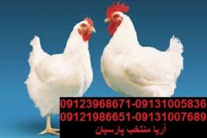 رابطه تغذیه و سلامت دستگاه گوارش جوجه طیور چیست - حذف مرغ پیر برابرباکاهش صادرات بوقلمون بيوتي , بوقلمون_گوشتي , بوقلمون گوشتي , خريد بوقلمون BUT6 , بوقلمون بومي , بوقلمون بيوتي , بوقلمون صنعتي , بوقلمون ارگانيك , بوقلمون سفيد , بوقلمون بيوتي 6 , بوقلمون بيوتي فوق سنگين , بوقلمون محلي شمال , خريد بوقلمون گوشتي در ورامين , فروش بوقلمون فرانسوي , فروش جوجه بوقلمون يكماهه در ورامين , بوقلمون بي يو تي در اروميه , قيمت جوجه بوقلمون بي يو تي , قيمت جوجه بوقلمون پانزده روزه , قيمت جوجه بوقلمون 15 روزه , حمل بوقلمون بيوتي زنده در ورامين , بوقلمون گوشتي در ورامين , خريد و فروش بوقلمون در ورامين, فروش بوقلمون گوشتي در ورامين , بوقلمون بيوتي 6 , خريدار جوجه بوقلمون but , جوجه يكماهه بوقلمون در ورامين , پرورش بوقلمون, جوجه بوقلمون , بوقلمون بيوتي 6 فوق سنگين, بوقلمون بيوتي 6 , قيمت جوجه بوقلمون بي يو تي , پرورش بوقلمون , جوجه بوقلمون, بوقلمون برنز , بوقلمون برنز آمريكايي , بوقلمون برنز انگليسي , بوقلمون برنز انگليس , بوقلمون برنز آمريكا , بوقلمون برنز كانادا , بوقلمون برنز ماسوله , بوقلمون برنز انگليس يكماهه , بوقلمون برنز فرانسوي , بوقلمون برنزآمريكا , بوقلمون برنز انگليسي 35 روزه , بوقلمون برنزه , بوقلمون برنز , مرغ , مرغ بومي , مرغ بومي گلپايگاني , مرغ بومي تخمگذار , تخمگذار , مرغ تخمگذار , جوجه مرغ بومي , جوجه تخمگذار بومي , مرغ بومي 5 ماهه , مرغ 5 ماهه , مرغ 5 ماهه بومي گلپايگان , مرغ بومي گلپايگان اصل , مرغ لوهمن قهوه , مرغ لومهن , مرغ بومي بلك , مرغ بومي گوشتي , مرغ بومي گلپايگاني , مرغ ال اس اس, مرغ پولت , نيمچه مرغ بومي , مرغ بومي محلي , بلدرچين , بلك استار , پليموت راك , مرغ بومي بلك , مرغ بومي بلك استار , مرغ بلك استار , مرغ , مرغ بومي تخمگذار , مرغ بومي محلي , نيمچه مرغ , نيمچه , نيمچه دو ماهه بلك , مرغ لوهمن قهوه , مرغ لوهمن , مرغ لوهمن دم طلايي , شترمرغ , شترمرغ پرواري , شترمرغ هچري يكماهه دوماهه , شترمرغ مولد , شترمرغ پرواري , شترمرغ استراليايي , شترمرغ ايران , شترمرغ آفريقايي , شترمرغ تربت حيدريه , شترمرغ اصفهان , شترمرغ يكماهه , شترمرغ روغن , روغن شترمرغ , شترمرغ زرينشهر , شترمرغ هچري , شترمرغ گيلان , شترمرغ گردن آبي , شترمرغ گوشتي , شترمرغ نر , شترمرغ ماده , ش