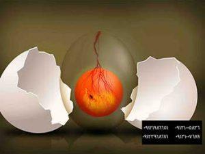 راهنمای انتقال تخم از ستر به هچر - علت انفجار و یا ترشح مواد درون تخم ها در دستگاه جوجه کشی شترمرغ09121986651