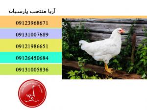برنامه ساخت سالن پرورش مرغ مناسب - چگونه می توان مرغداری خوب ساخت - نحوه راه اندازی تجارت مرغداری - - فروش مرغ تخمگذار 4 ماهه - فروش مرغ صنعتی تخمگذار - فروش مرغ تخمگذار صنعتی - فروش مرغ صنعتی تخم گذار - فروش مرغ تخم گذار صنعتی - تخمگذار - تخم گذار - تخم مرغ - تخم - مرغ تخم گذار