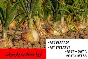 آموزش کشت و تست بذر چغندر در خانه - کاشت مخلوطی از چند گیاه - فروش بذر پیاز - کشت بذر پیاز - بذر پیاز - خرید بذر پیاز - قیمت بذر پیاز -