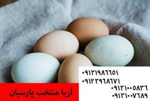 افزایش قیمت تخم مرغ در میادین تره بار - رنگ تخم ارتباط بالاله گوش مرغ دارد دارد - ⚫️فروش جوجه 1 روزه بومی اصلاح نژاد شده09131007689