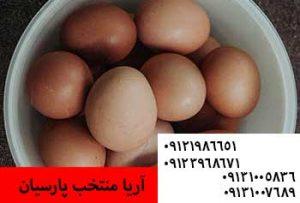 کنترل اندازه تخم مرغ در مرغهای بومی - راهنمای انتقال تخم از ستر به هچر - یک مرغ در طول زندگیاش چند تخم میگذارد؟09131005836
