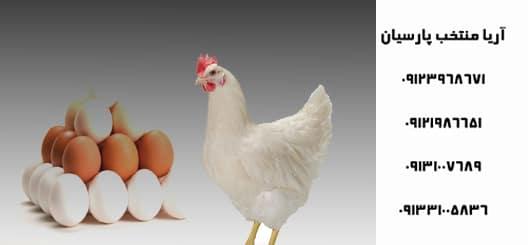 جایگزین آنتی بیوتیک در طیور - انتقاد شدید از نحوه مدیریت بیماری آنفلوآنزای فوق حاد پرندگان - فروش جوجه مرغ هایلاین یک روزه