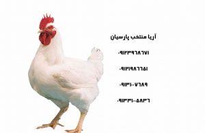 مرغ تخمگذار صنعتی و بومی چه نژادهای مختلفی دارد؟ - آشنایی با مرغ - فروش مرغ ال اس ال ( مرغ مادر تخم گذار) - رابطه نور متناوب و آسیت در طیور - جدول قیمت انواع جوجه - مرغ تخمگذار هایلاین - فروش جوجه بوقلمون اصفهان , فروش جوجه بوقلمون تهران , فروش جوجه بوقلمون مشهد , فروش جوجه بوقلمون تبریز, فروش جوجه بوقلمون ارومیه , فروش جوجه بوقلمون اردبیل , فروش جوجه بوقلمون کردستان , فروش جوجه بوقلمون بانه , فروش جوجه بوقلمون مرز خسروی , فروش جوجه بوقلمون خوزستان , فروش جوجه بوقلمون اهواز , فروش جوجه بوقلمون زاهدان , فروش جوجه بوقلمون خراسان جنوبی , فروش جوجه بوقلمون مشهد , فروش جوجه بوقلمون گرگان , فروش جوجه بوقلمون رشت , فروش جوجه بوقلمون ساری , فروش جوجه بوقلمون ایلام , فرو ش جوجه بوقلمون کرمانشاه , فروش جوجه بوقلمون بیرجند , فروش بوقلمون بروجرد , فروش جوجه بوقلمون شهرکرد , فروش جوجه بوقلمون زنجان , فروش جوجه بوقلمون سمنان , فروش جوجه بوقلمون قم , فروش جوجه بوقلمون قزوین , فروش جوجه بوقلمون یزد , فروش جوجه بوقلمون زابل , فروش جوجه بوقلمون صادراتی, , فروش جوجه شترمرغ اصفهان , فروش جوجه شترمرغ تهران , فروش جوجه شترمرغ مشهد , فروش جوجه شترمرغ تبریز, فروش جوجه شترمرغ ارومیه , فروش جوجه شترمرغ اردبیل , فروش جوجه شترمرغ کردستان , فروش جوجه شترمرغ بانه , فروش جوجه شترمرغ مرز خسروی , فروش جوجه شترمرغ خوزستان , فروش جوجه شترمرغ اهواز , فروش جوجه شترمرغ زاهدان , فروش جوجه شترمرغ خراسان جنوبی , فروش جوجه شترمرغ مشهد , فروش جوجه شترمرغ گرگان , فروش جوجه شترمرغ رشت , فروش جوجه شترمرغ ساری , فروش جوجه شترمرغ ایلام , فرو ش جوجه شترمرغ کرمانشاه , فروش جوجه شترمرغ بیرجند , فروش شترمرغ بروجرد , فروش جوجه شترمرغ شهرکرد , فروش جوجه شترمرغ زنجان , فروش جوجه شترمرغ سمنان , فروش جوجه شترمرغ قم , فروش جوجه شترمرغ قزوین , فروش جوجه شترمرغ یزد , فروش جوجه شترمرغ زابل , فروش جوجه شترمرغ صادراتی , قیمت جوجه بوقلمون اصفهان , قیمت جوجه بوقلمون تهران , قیمت جوجه بوقلمون مشهد , قیمت جوجه بوقلمون تبریز, قیمت جوجه بوقلمون ارومیه , قیمت جوجه بوقلمون اردبیل , قیمت جوجه بوقلمون کردستان , قیمت جوجه بوقلمون بانه , قیمت جوجه بوقلمون مرز خسروی , قیمت جوجه بوقلمون خوزستان , قیمت جوجه بوقلمون اهواز , قیمت جوجه بوقلمون ز