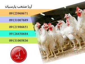 برای شناسایی دلایل تلفات باید به نکات خاصی توجه نمود - احیای پرورش جوجه مرغ آرین - فروش جوجه مرغ -