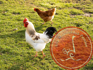 استفاده از سبزیجات در تغذیه مرغ بومی: