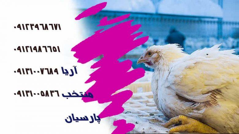 خرید مرغ - فروش محصولات مالداری افغانستان - شناخت بیماری های طیور-سالمونلا پولوروم - بسته بندی گوشت طیور-تهیه مواد اولیه -